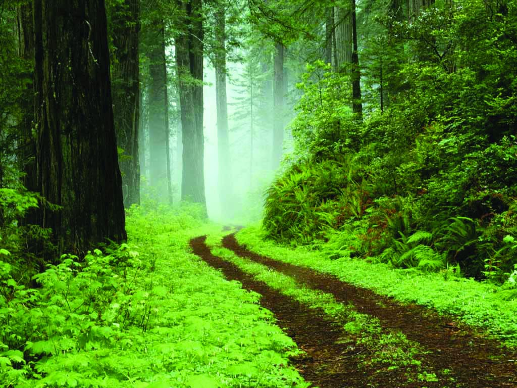 essay on necessity of the conservation of forests Essay on conservation of forest forests are the major part of our balanced ecological and biological forms which are present throughout.