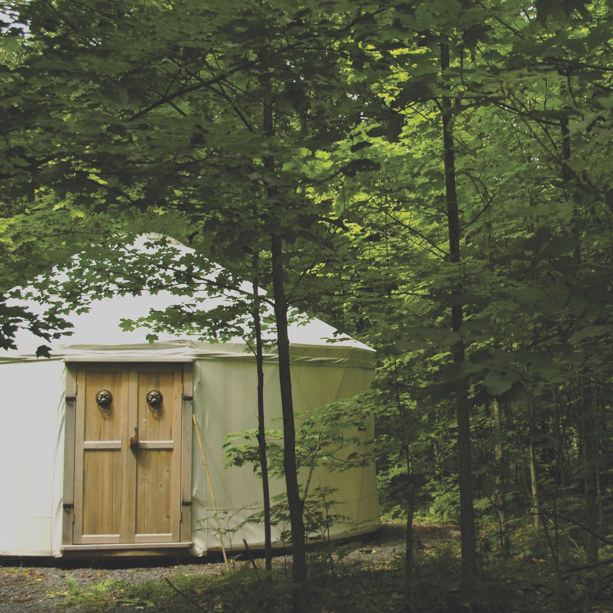 a tent in the woods used for carp ridge ecowellness' healing services
